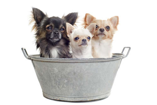 犬ってお風呂に入れたほうがいい? お風呂の頻度と入れ方