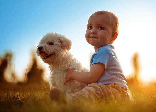 赤ちゃんがいる家庭、犬は共存できる? しつけの仕方について