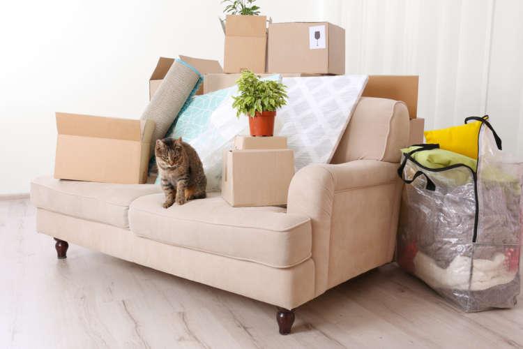 【獣医師監修】猫は引っ越しが苦手? 引っ越し時の注意点と引っ越し後のケア
