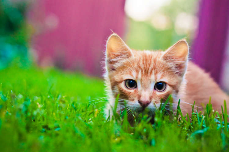【獣医師監修】猫のひげの役割はとっても大事! 状態とそのサインとは