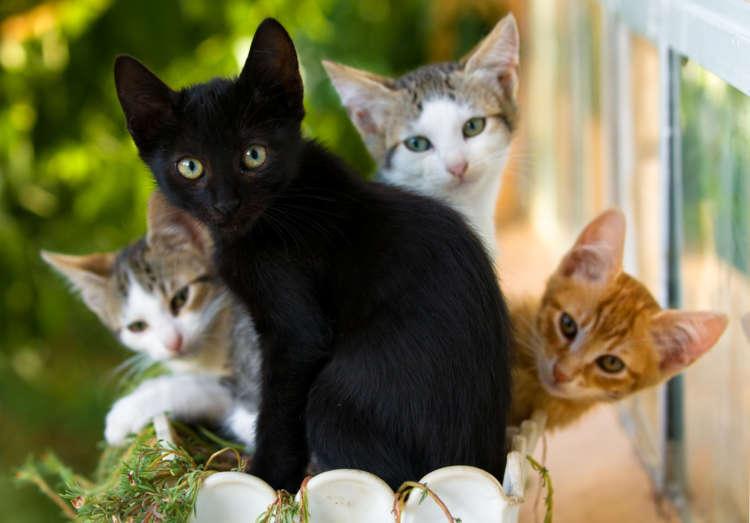 【獣医師監修】猫の目の色の種類と、 注意すべき目の色