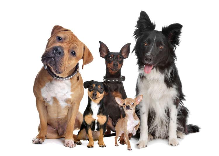 初心者でも飼いやすい犬とは? オススメの犬種を紹介します
