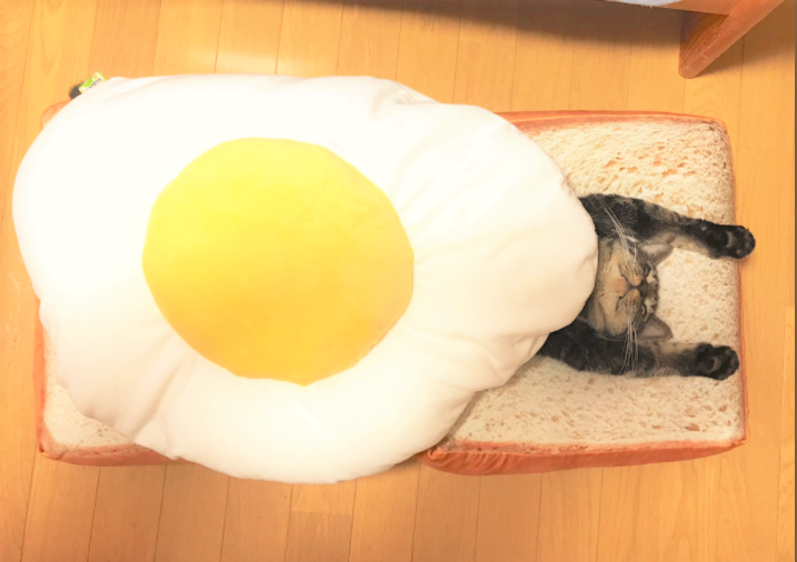 【朝ごはんニャンコ♡】パンと目玉焼きのクッションに挟まれた猫が、食べちゃいたいほどかわいかった♡