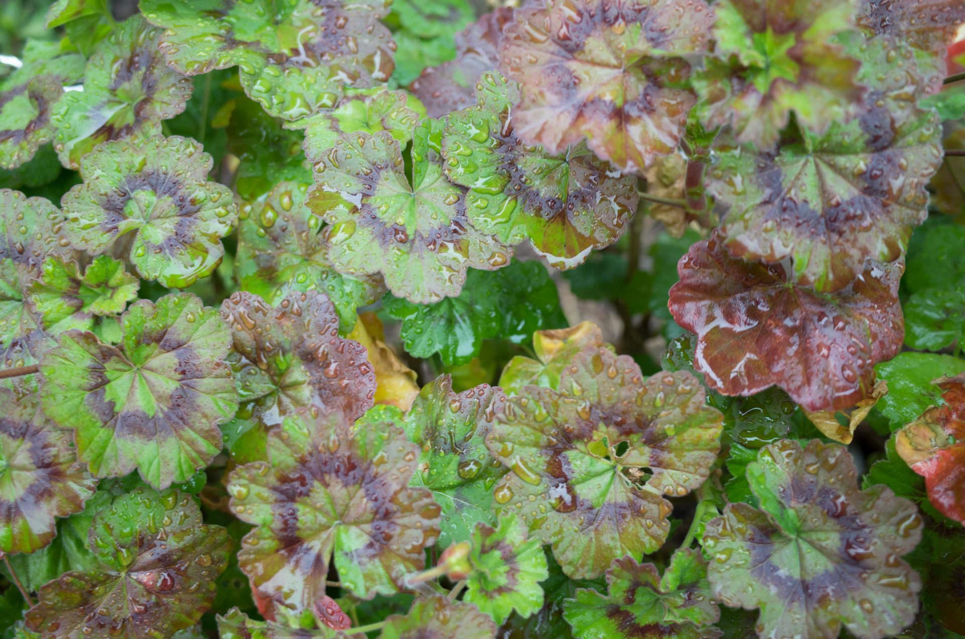 コンパクトデジタルカメラで撮影された緑色の葉っぱ