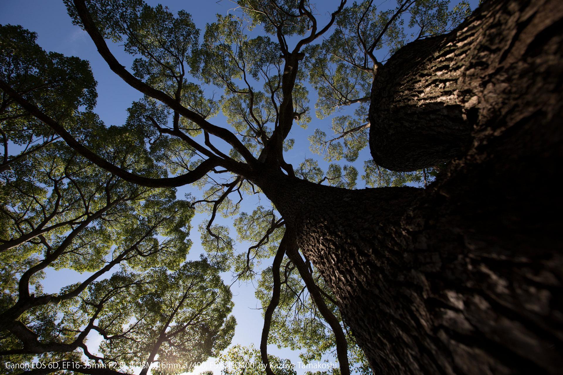 昭和記念公園の木(マニュアルのサンプル)