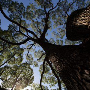 昭和記念公園の木