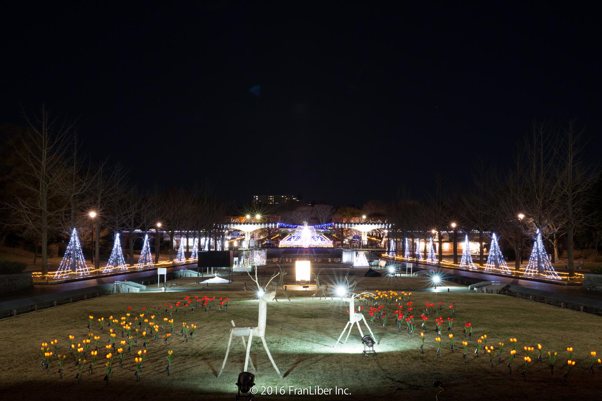 昭和記念公園の入口付近のイルミネーション