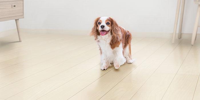 犬用の床材 JネクシオWF