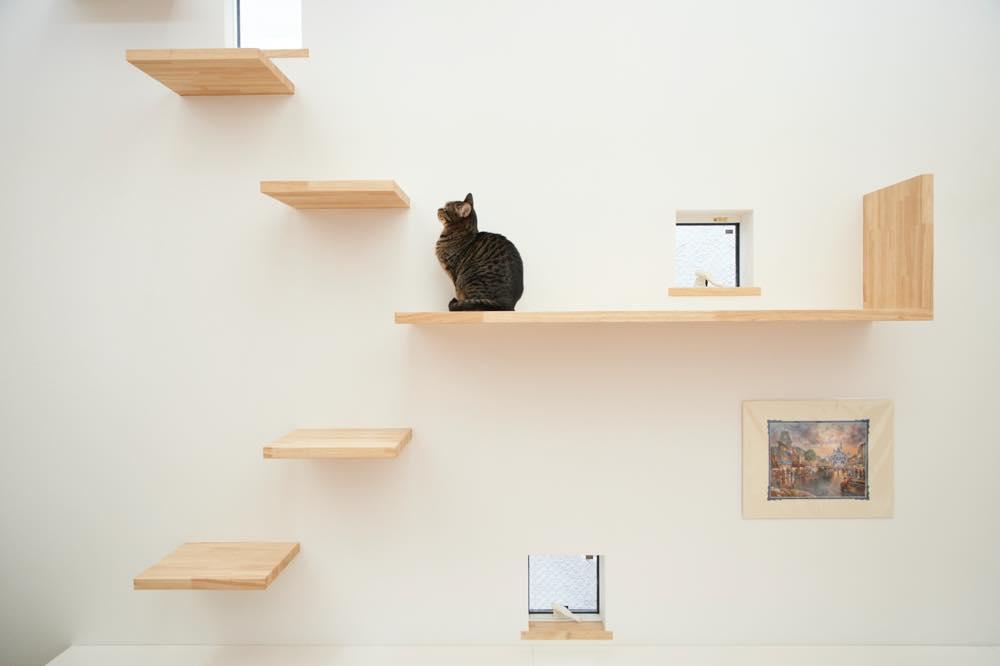 【一級建築士監修】PAWs Styleで叶う人もペットも幸せな家のつくりかた
