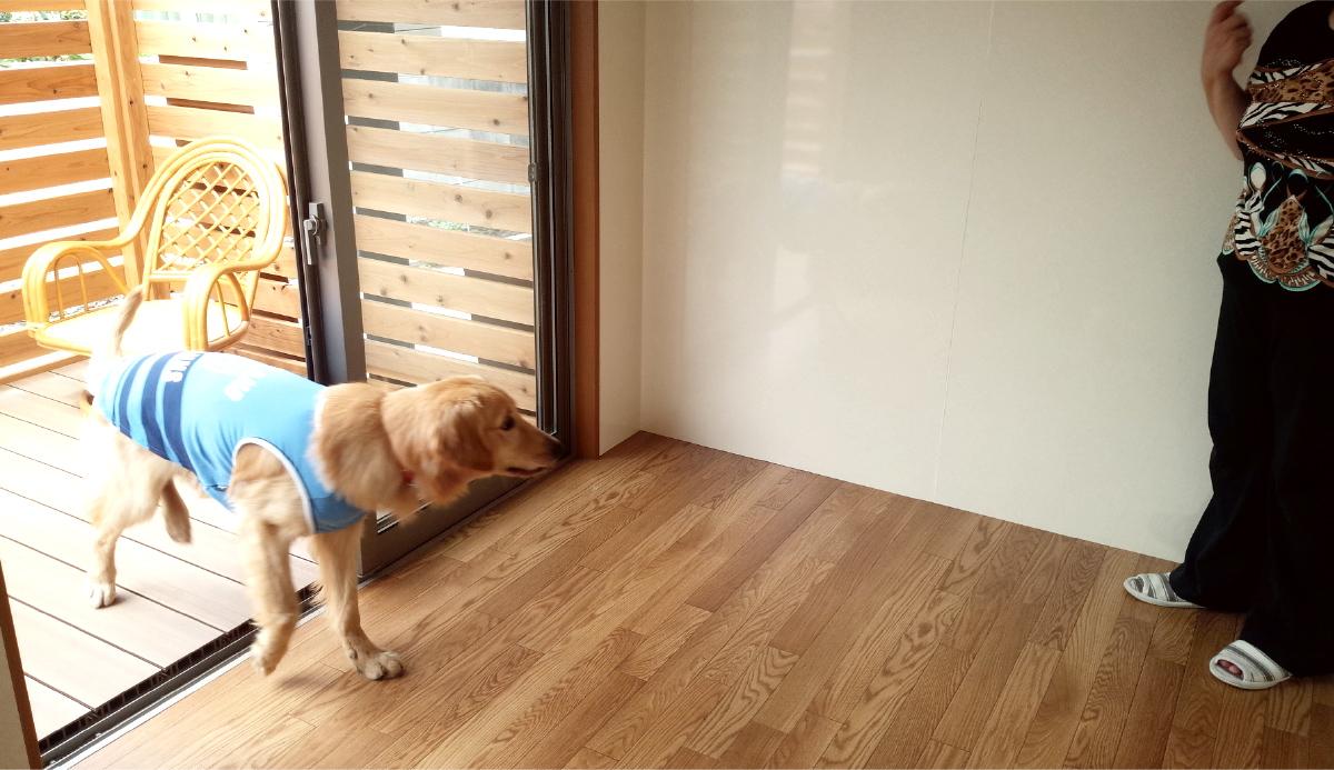 ペットの床の対策