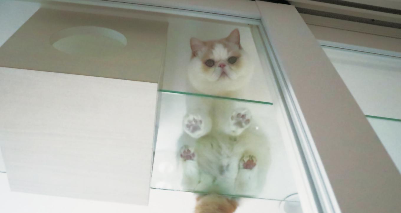 【一級建築士監修】猫共生住宅のエキスパートに聞く 猫も人も快適な住まいはどうつくる?