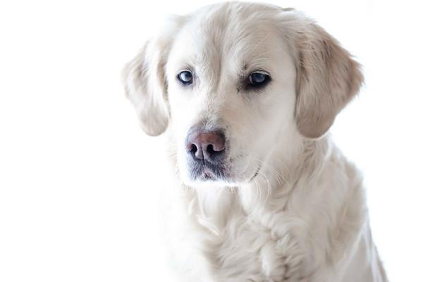 平和的なボディランゲージの犬