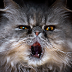 猫の歯周病