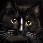 猫の心筋症