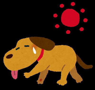 炎天下の犬