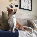 【保護犬出身コルクのDIY体験レポート】犬にも優しくおしゃれな部屋レイアウト術