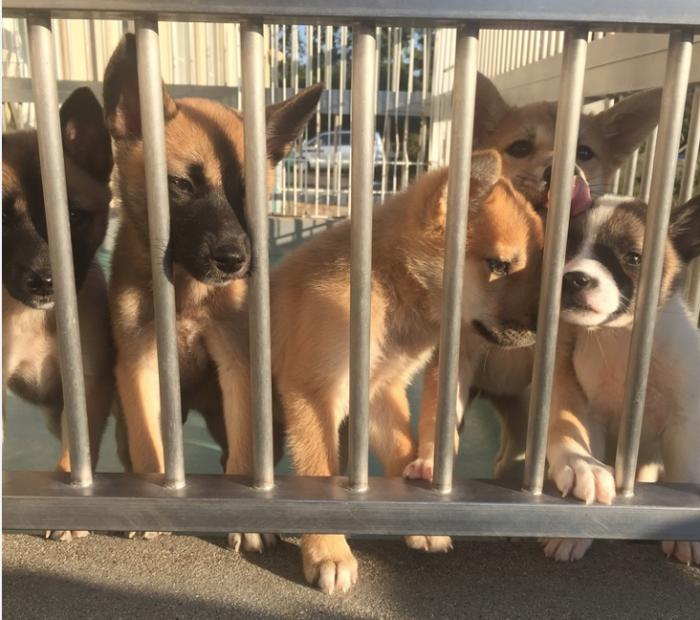 愛知県 動物愛護センター