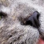 猫の歯が抜ける・折れる