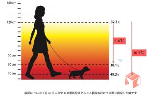 犬の熱中症対策