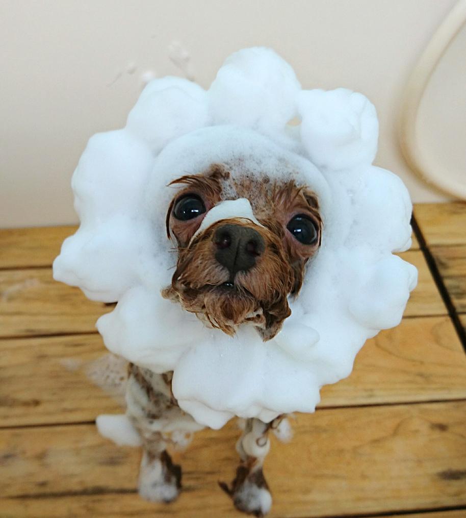 シルクパックをしている犬