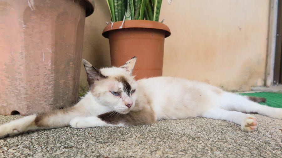植木鉢のそばで眠る猫