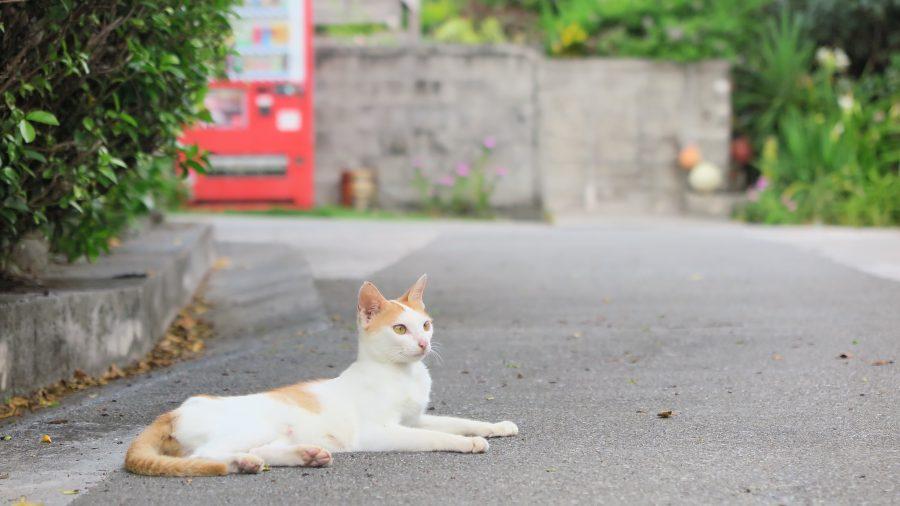 道路に横たわる猫