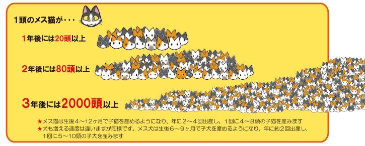 猫の繁殖能力をグラフ化した画像