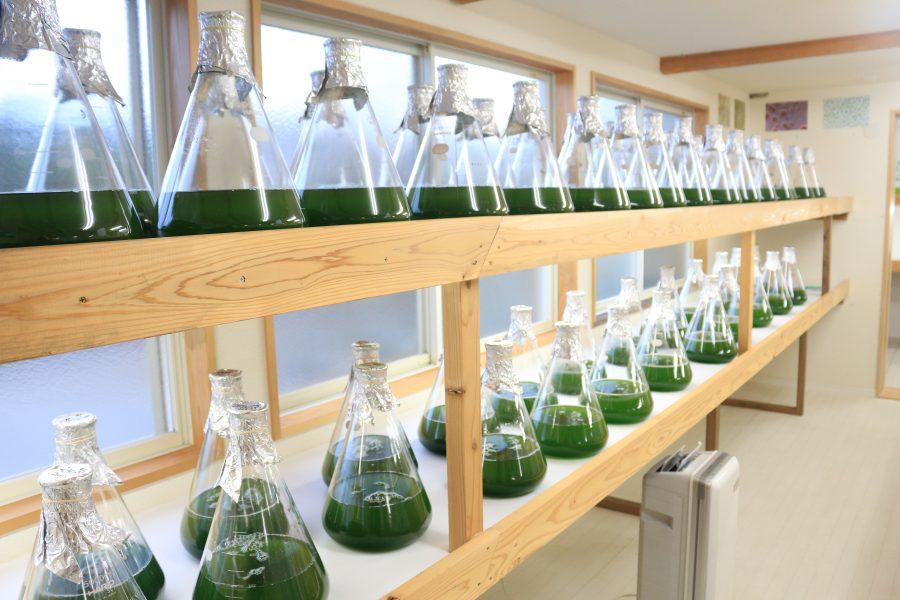 別府温泉の藻類を研究する様子
