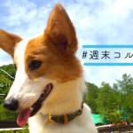 【 #週末コルク 】社員犬コルクが「わんダフルネイチャーヴィレッジ」に行ってきた!