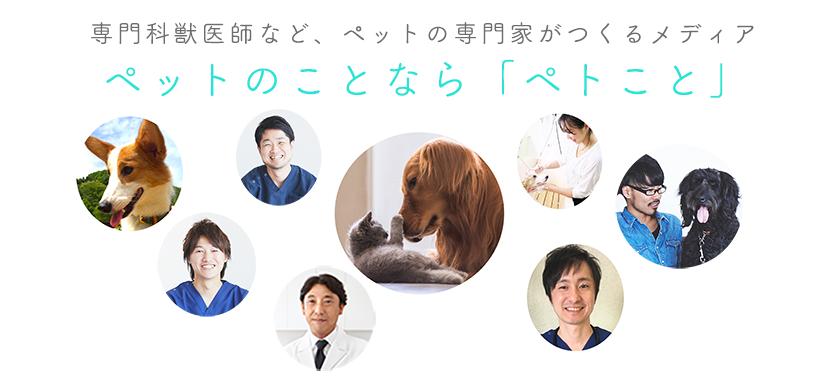 「ペトこと」は、専門医獣医師などペットの専門家がつくるメディアです。