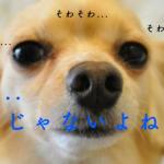 犬の人気ランキング