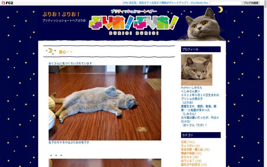 ブリティッシュショートヘアのブログ「乙女猫日記」