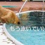 20170606_dogpool_ni_012