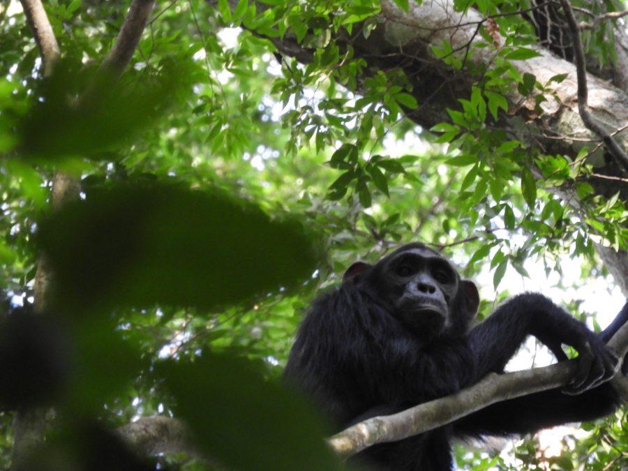 アフリカ9カ国縦断記で出会った猿