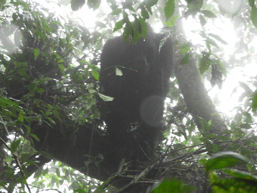 アフリカ9カ国縦断記で出会ったゴリラ