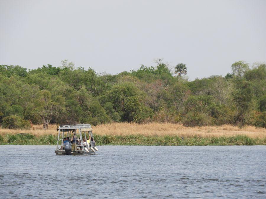 アフリカ9カ国縦断記で出会ったハシビロコウ