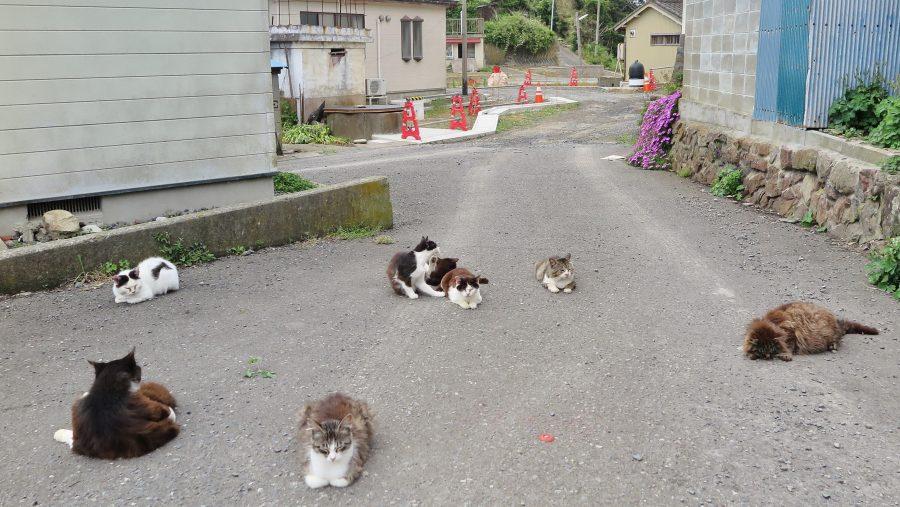 道路を占拠する田代島の猫たち