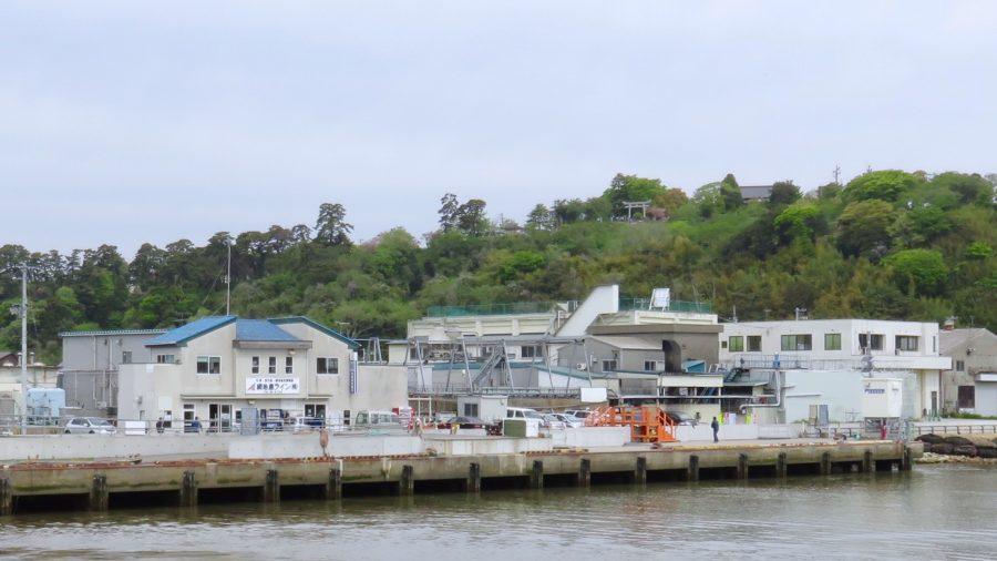 網地島ラインの石巻発着所と「石巻」の地名の由来となった伝承が残る「鹿島御児(みこ)神社」