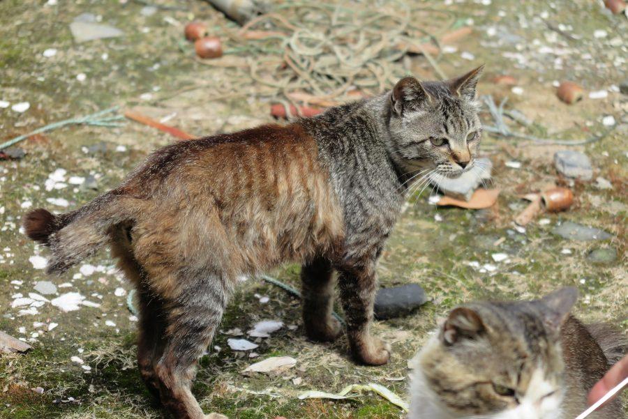 2種類の毛並みを持つ不思議な猫