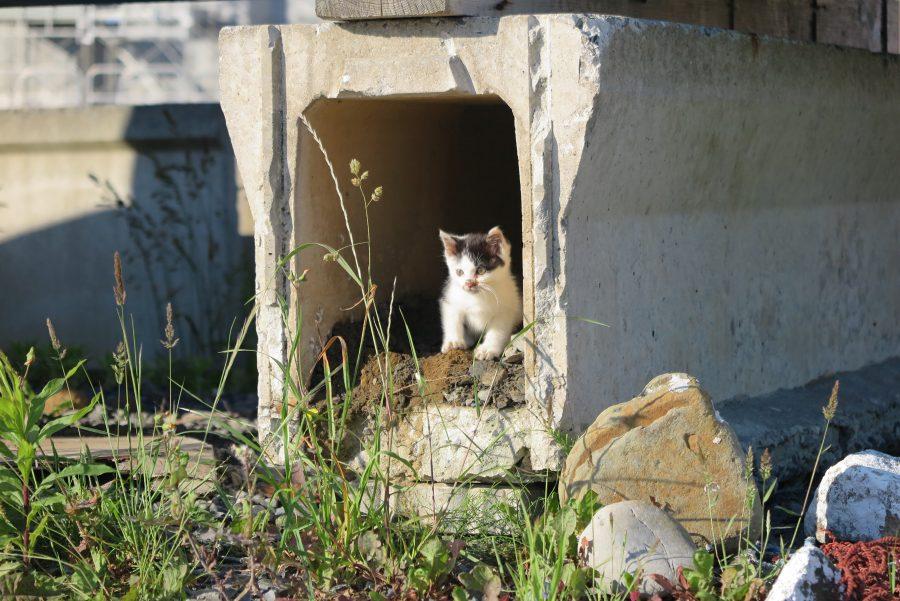 仁斗田港にいた子猫