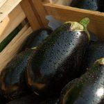 20170718_eggplant_ni_002