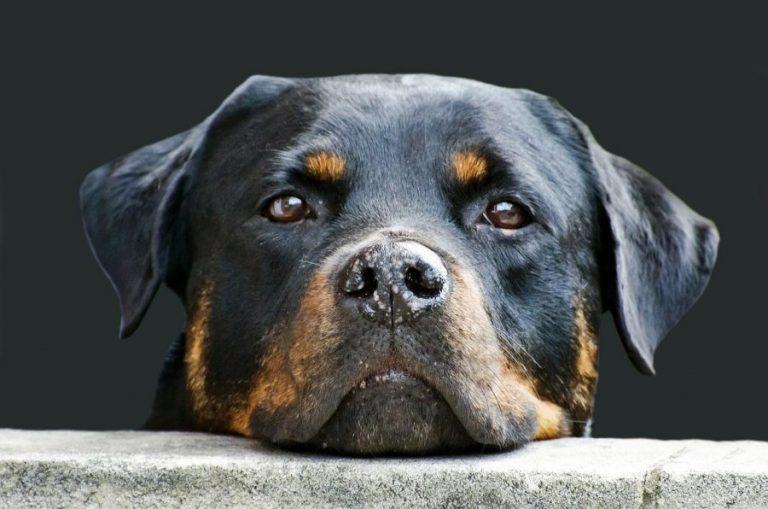 dog-214580_1280