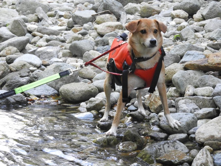 那須で犬とリバーウォーク