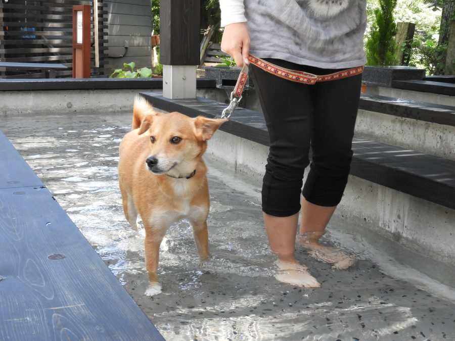 雑種犬・MIX犬の飼い方
