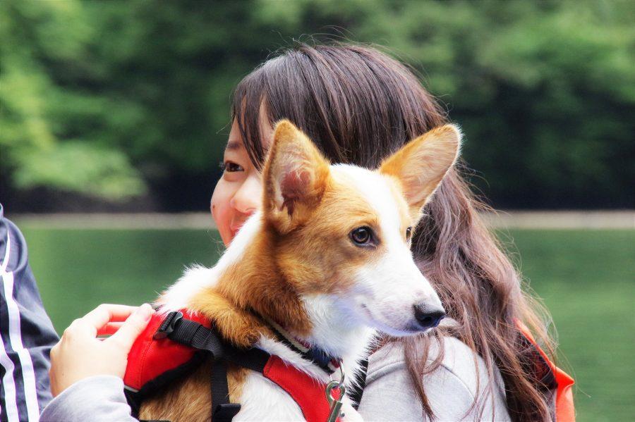 那須で犬とカヤック