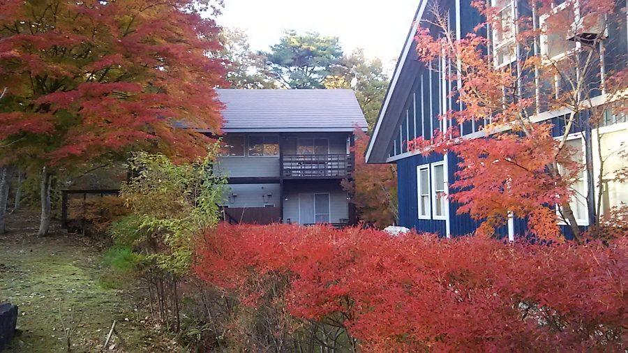 犬と秋に行きたい紅葉が楽しめるお出かけスポットの栃木県の那須