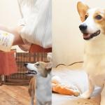犬猫に舐めさせるだけの口臭ケア!  飼い主も嬉しい「簡単・便利」なペロワンがすごい…!