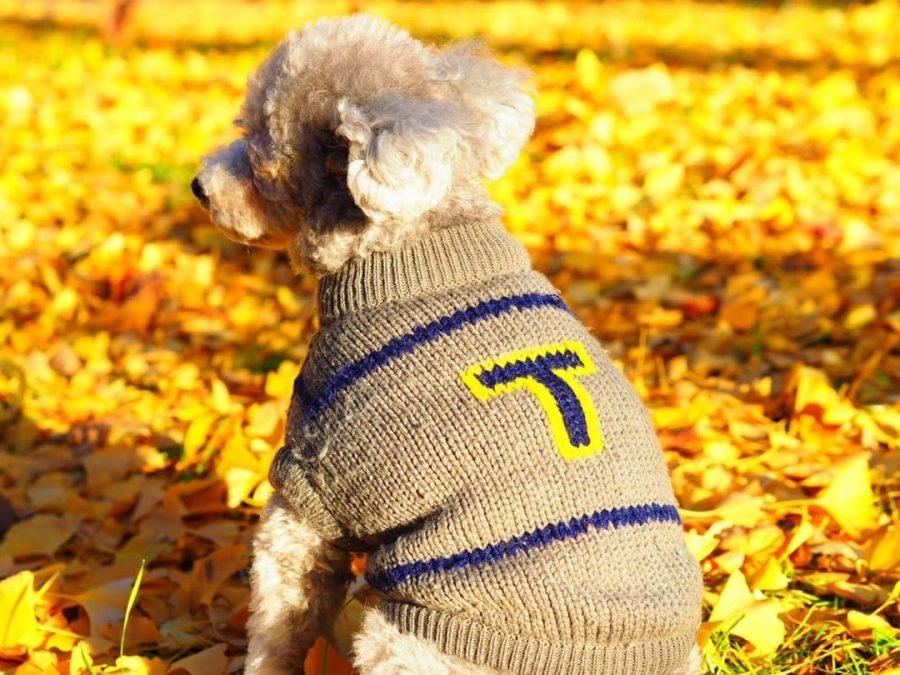 犬と秋に残したい写真