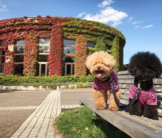 犬と秋に行きたい紅葉が楽しめるお出かけスポット北海道倶の農試公園