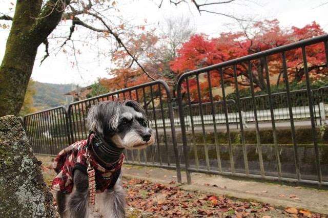 犬と秋に行きたい紅葉が楽しめるお出かけスポットの滋賀県の琵琶湖疏水